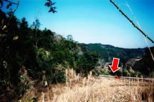 道路から近い被害地の様子(図中矢印が道路)