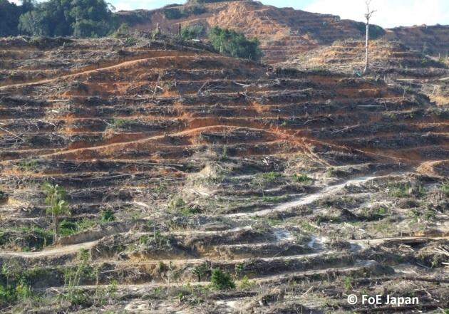 プランテーションのために伐採された山(マレーシア・サラワク州)